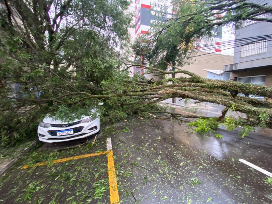 Árvores danificam postes de rede elétrica