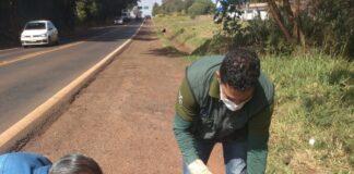 onça parda do parque ecológico da Usina Mourão